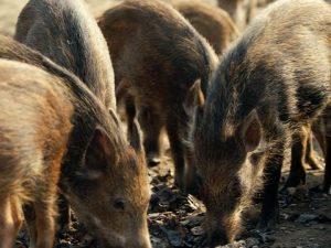 Send us into the swine